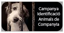 Campanya Identificació Animals de Companyia